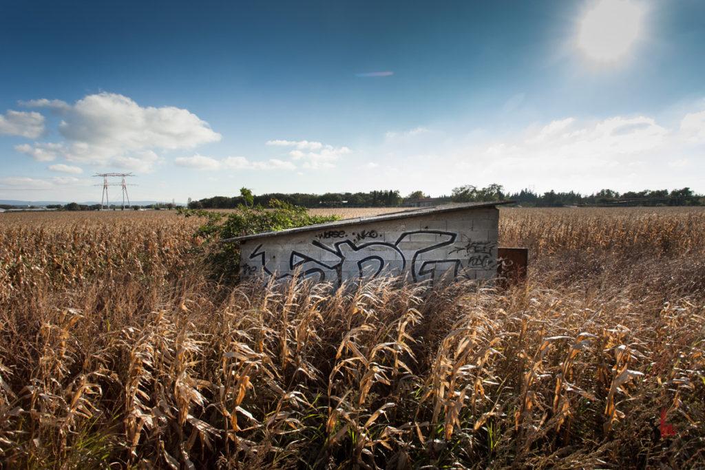graffiti sur un cabanon au milieu des champs